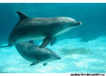 Dolphin Stock.2 by Della-Stock