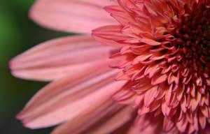 pretty in pink by jeanbeanxoxo