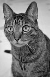 kitty by jeanbeanxoxo