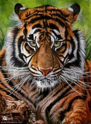 Sumatrian tiger by Azany