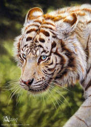 White tiger by Azany