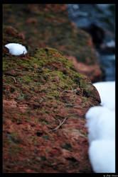 Winter Moss by JohnDamen