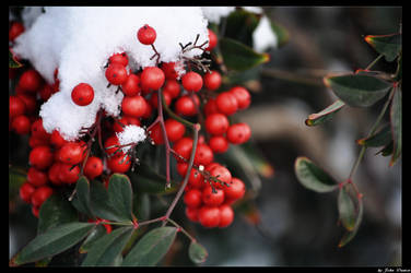 Winter Red by JohnDamen