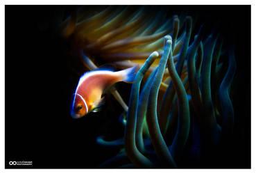 SeaLife by creativegrafix