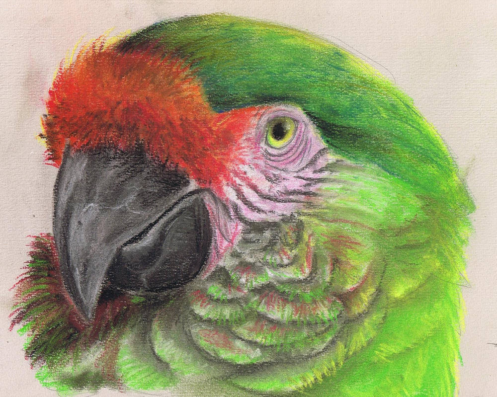 Green Macaw - Soft Pastel by Finchwing