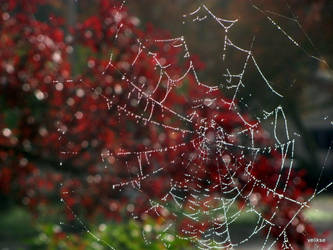 Spider Web by velikse