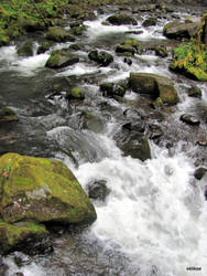 McDowell Creek by velikse