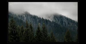 Foggy by DianaCretu