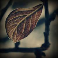 Fading away by DianaCretu