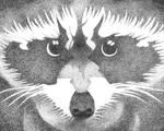 Racoon by kilroyart