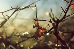 golden rain by Herzlich-t