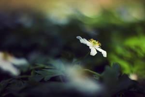 spring 3 by Herzlich-t