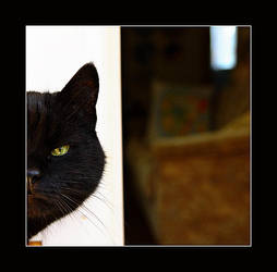 Rontti the cat by Maresolo