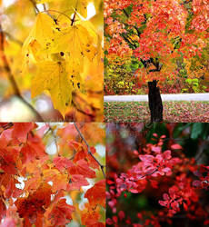 Fall Colors 2013 by emily0690