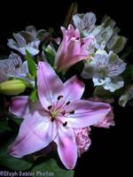 Valentine Love Lily by StephGabler