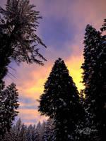 Snowy Sunrise by StephGabler
