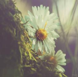 I wish you ... by Ikonokl4st