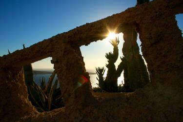 Shiny cactus by Septdeneuf