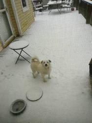 Boris In The Snow by SilverStarOfSootClan
