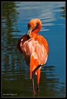 Solo Flamingo by Haywood-Photography