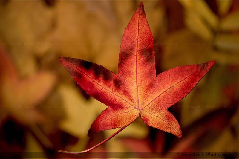 Falling Leaf 0468o by Haywood-Photography
