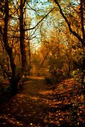Enchanted forest 5 by CathleenTarawhiti