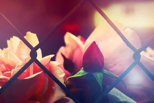 Stock - floral by CathleenTarawhiti