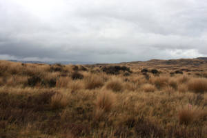 Tussock land stock by CathleenTarawhiti