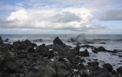 Seals near Kaikora South Island New Zealand 5 by CathleenTarawhiti