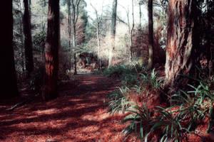 Crimson forest by CathleenTarawhiti