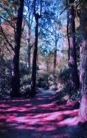 Purple forest by CathleenTarawhiti