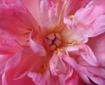 Flowers stock 3 by CathleenTarawhiti
