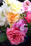 Flowers stock 4 by CathleenTarawhiti