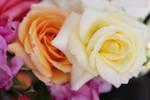 Flowers stock 5 by CathleenTarawhiti