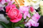 Flowers stock 6 by CathleenTarawhiti