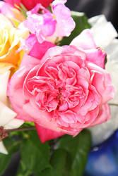 Flowers stock 7 by CathleenTarawhiti