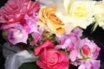 Flowers stock 9 by CathleenTarawhiti