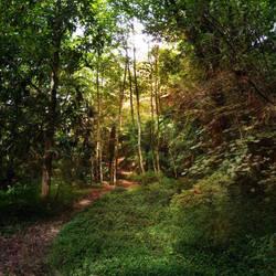Forest stock by CathleenTarawhiti