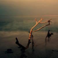 Natura Morta by DavideDeDomenico
