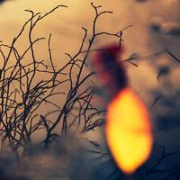 Yellow leaf... by DavideDeDomenico