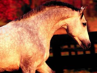 grey horse by CryWolf1927
