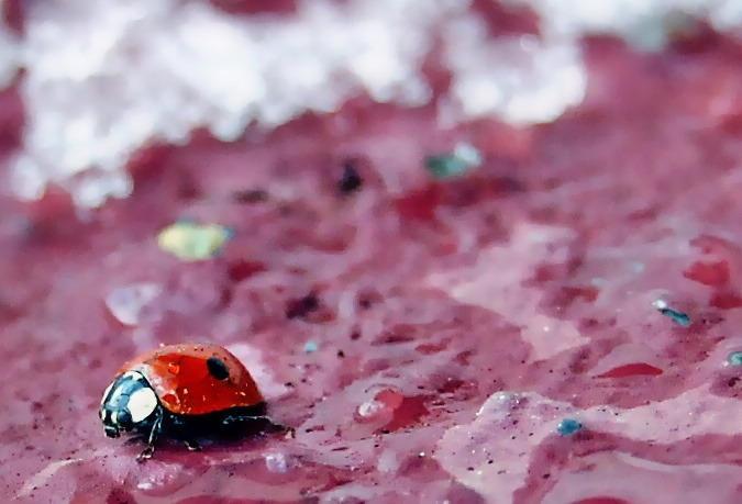 Wheres the Ladybug?
