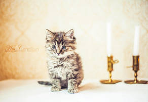 Feline Beauty by AmCreationss