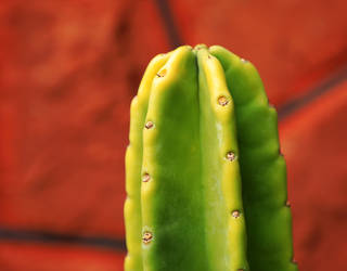 Cactus 2 by maghigol