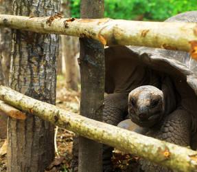 Tortoise 5 by maghigol