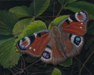 butterfly by rasberry6
