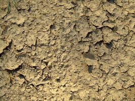 ground texture 1 by asmozz