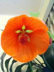 Flower of life by TotallyUnspoken
