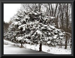Cedar trees by MistressVampy