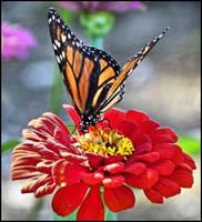 The Monarch by MistressVampy